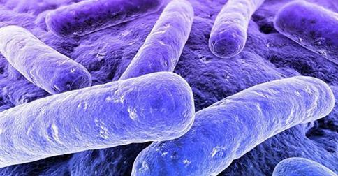 La Flora Batterica Intestinale